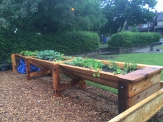 April – October 2015 – Macgregor Park – Livegreen/O.A.C./Canada Council for the Arts -Accessible raised garden beds (built with teens and Triluma Living Collaborative)-